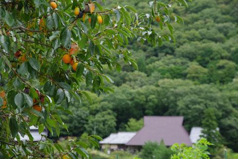 Tachikui